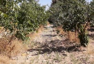 Eskişehir Karapazar Köyünde Satılık Tarla